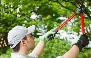 gardening hendon. nw4