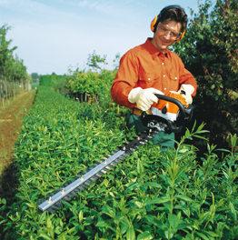 Hedge Trimming Hendon